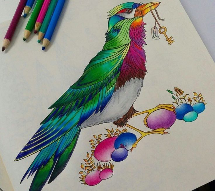 17 Best Images About Bird Enchanted Forest P 225 Ssaro Enchanted Forest Coloring Book Johanna Basford Enchanted Forest Enchanted Forest Coloring