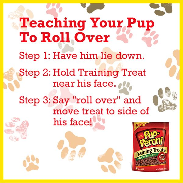 how to teach a dog to roll over easy