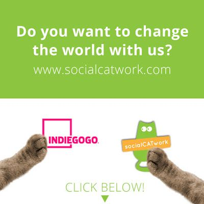 socialCATwork: SUPPORT THE PROJECT ON INDIEGOGO