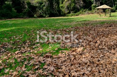 maple carpet Royalty Free Stock Photo