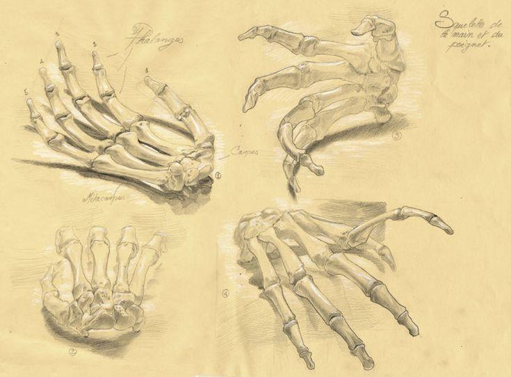 Squelette du poinget de la main 01 main pied hand foot main squelette dessin squelette - Dessin de la main ...