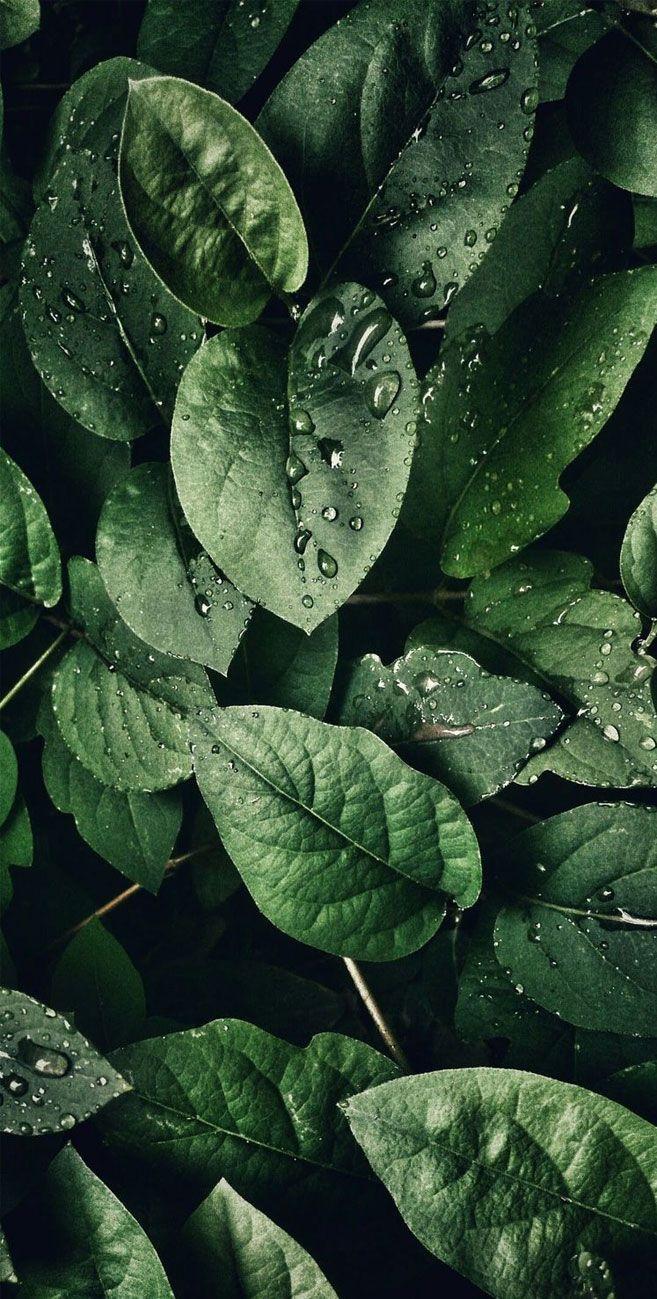 Tropical Leaves, Botanicals, Leaf Phone Wallpaper - iphone background #wallpaper #background