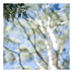 intoxicatingly refreshing eucalyptus • Australian bush • home 2014