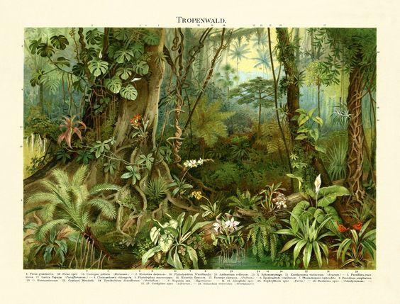 Tropisch regenwoud | Behang op rol | Naturalis Originals - Behang, muurposters, murals en decoratie op basis van de natuurhistorische collectie van Naturalis