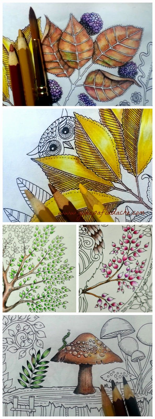 The secret garden coloring book target - Coloring Leaves And A Toadstool In Adult Coloring Book