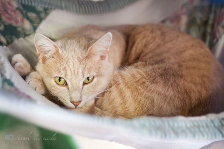 This is Sunny, and so far the shelter's been her ray of light.  She was walking around outside here with Moire and is the more social of the two. Sunny purrs loudly when you pet her.  This shy girl loves attention!  Sunny and Moire like playing and...