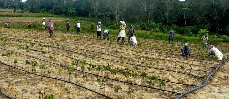 TRIBUNE. Pour cet expert, le continent veut et peut devenir le nouvel eldorado des entreprises agroalimentaires et agricoles. Explications.