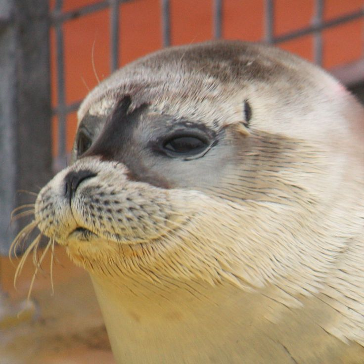 Zeehondencrèche - Seal Rescue Center in Pieterburen, The Netherlands