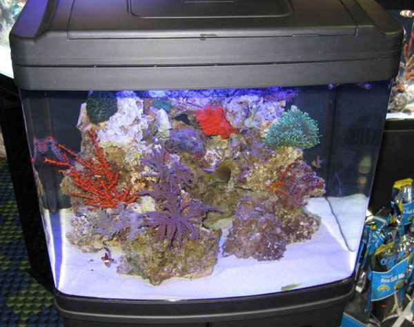 17 best images about aquarium saltwater on pinterest for Marine fish tanks