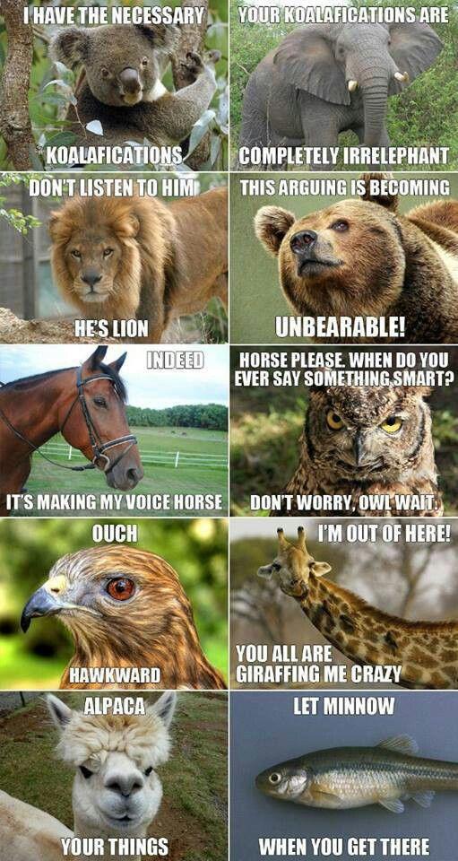 Animal humor. Never fails