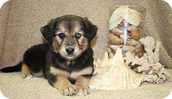 Pet Adoption Santa Rosa Beach Fl