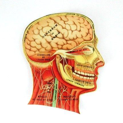 11 best images about Vintage Medical Illustrations on ...