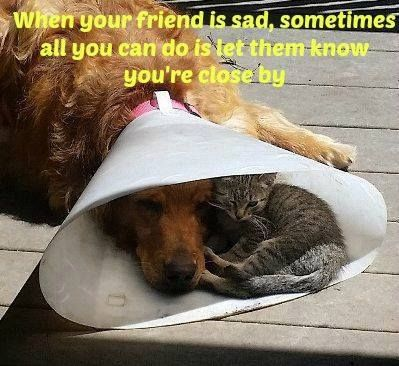 When your friend is sad, sometimes all you can do is let them know you're close by - McCannDogs.com