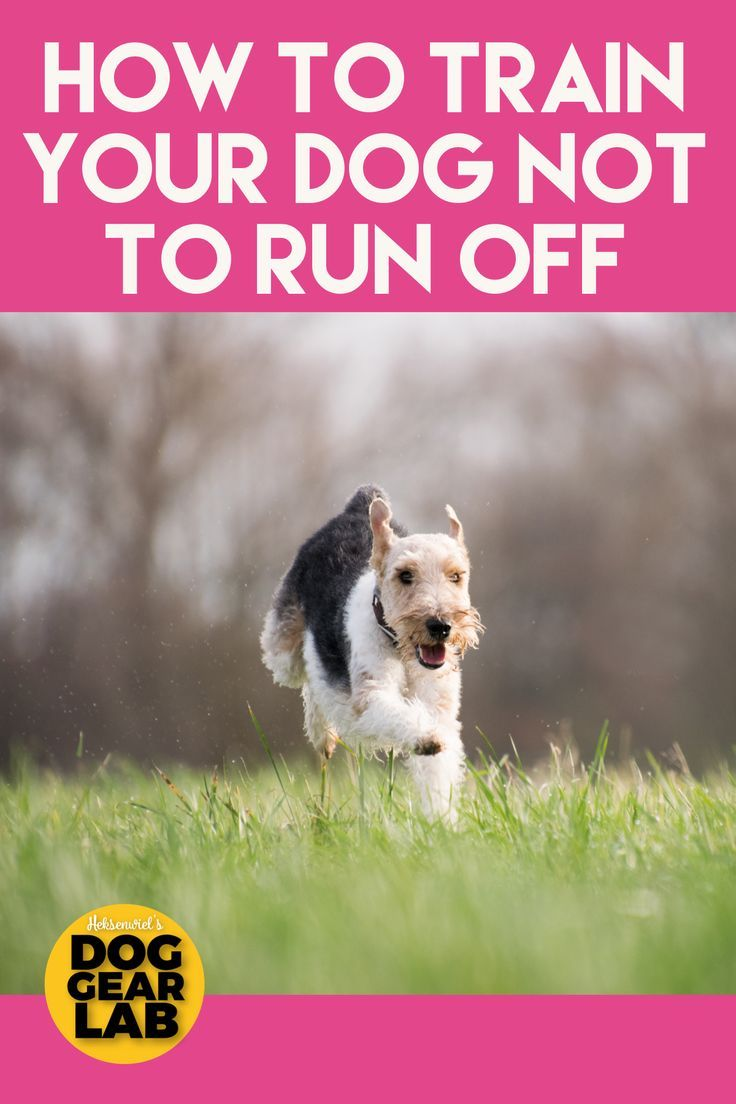 How To Train Your Dog Not To Run Off Easiest Dogs To Train Dog