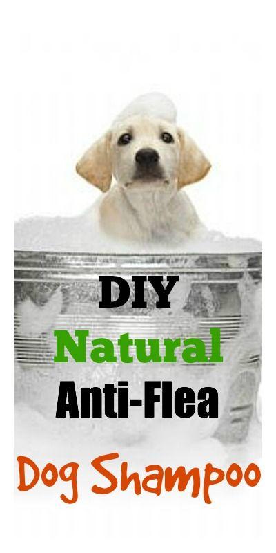 Shampo natural antipulgas para perros - DIY Natural Anti-Flea Dog Shampoo
