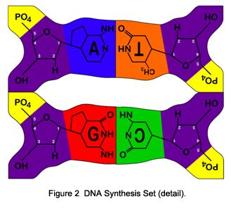 DNA Synthesis Set