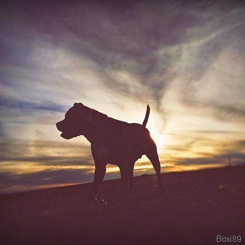 Ansiedade de separação em cães–Entenda o seu cachorro