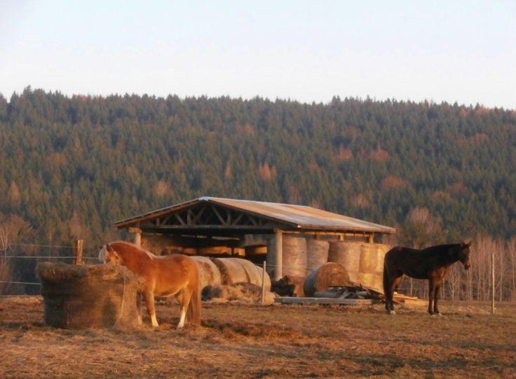 Koně, Mladé Bříště