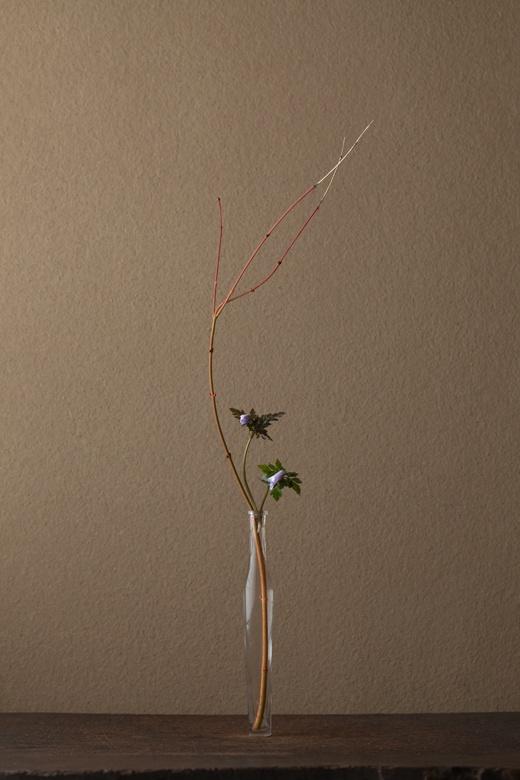2012年4月24日(火)  春は枝先が天を目指す季節。足もとでは草花が戯れています。   花=楓(カエデ)、雪割一花(ユキワリイチゲ)   器=古ガラス細瓶(20世紀)