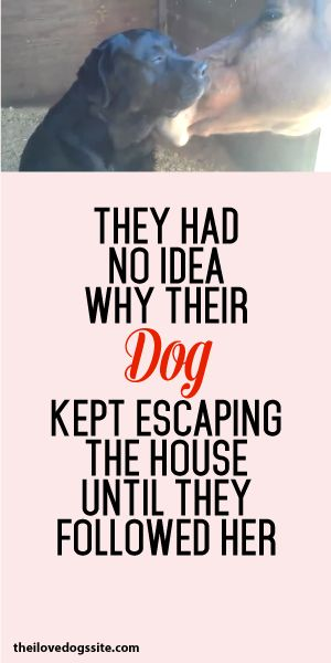 They Had No Idea Why Their Dog Kept Escaping The House Until They Followed Her...