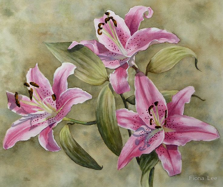 Fiona  Lee   WATERCOLOR