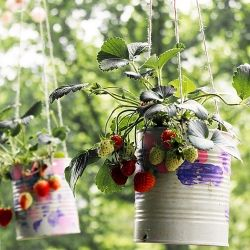 DIY Strawberry Planters - So Im a sucker for re-using old mason jars or even food jars to make plants look cool and gif the garden that extra personal touch