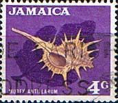 Jamaica 1970 SG 310 Decimal Shell Fine Used       SG 310 Scott 309    Condition Fine Used             Only one post charge applied on multipule