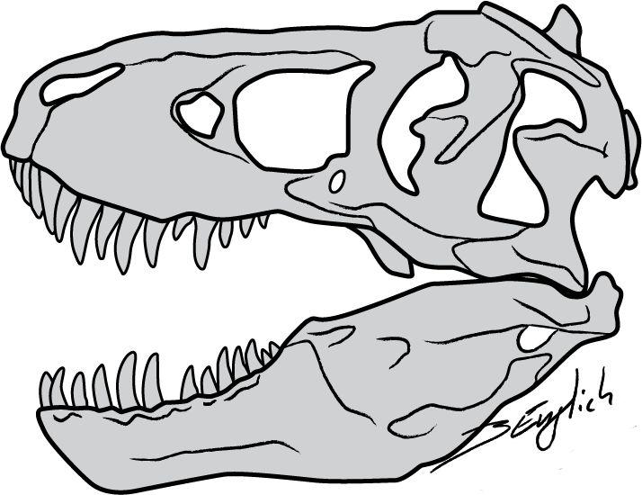 T Rex Skull By Belverine On Deviantart