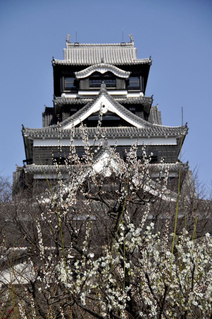 Kumamoto Castle and Japanese apricot blossoms, Japan