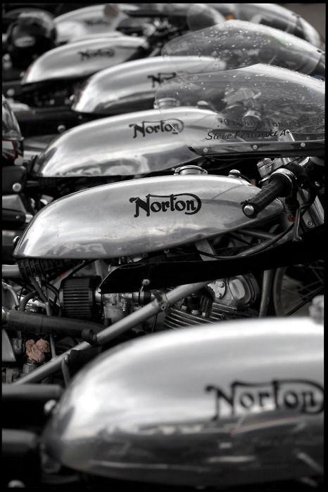 Norton's aplenty