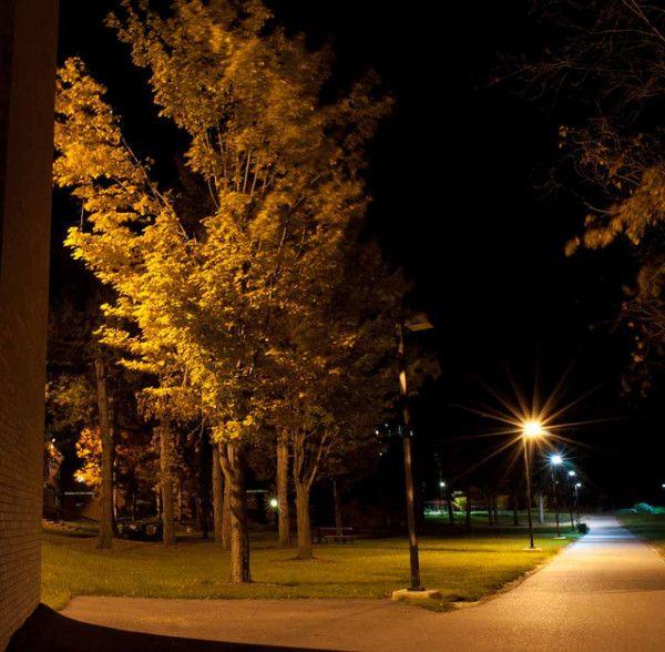 Street Light Trees At Night Tree In Street Light Night