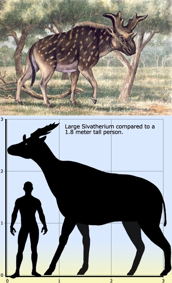 291 best Prehistoric Mammals images on Pinterest ...