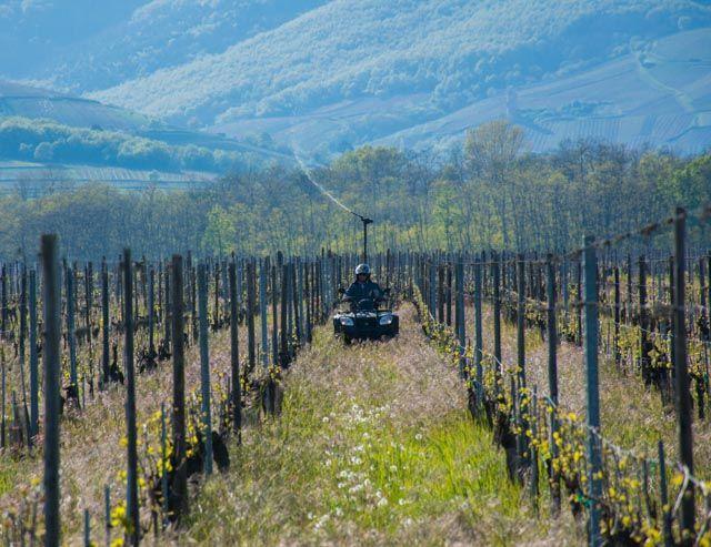 Galerie photo - Vins Bio d'Alsace - Domaine de l'Envol  Organic Wine    Dynamisation à la 500p, une solution biodynamique  Spraying biodynamic solution in vineyard