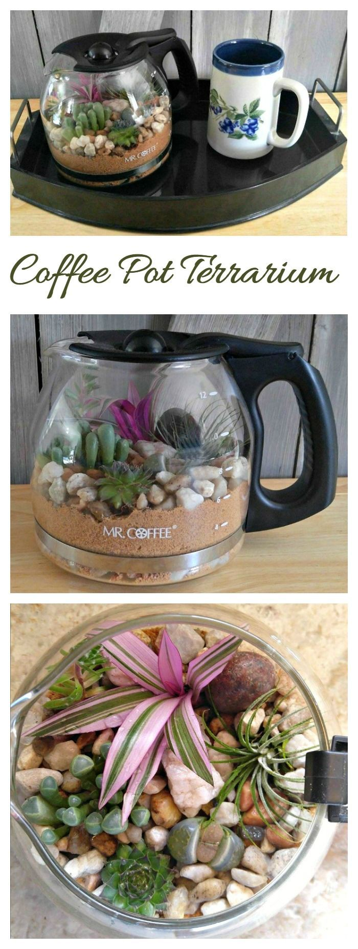 This Coffee pot Terrarium is a fun way to add some pretty plant decor. It keeps the humidity level right so that watering is not needed very often.