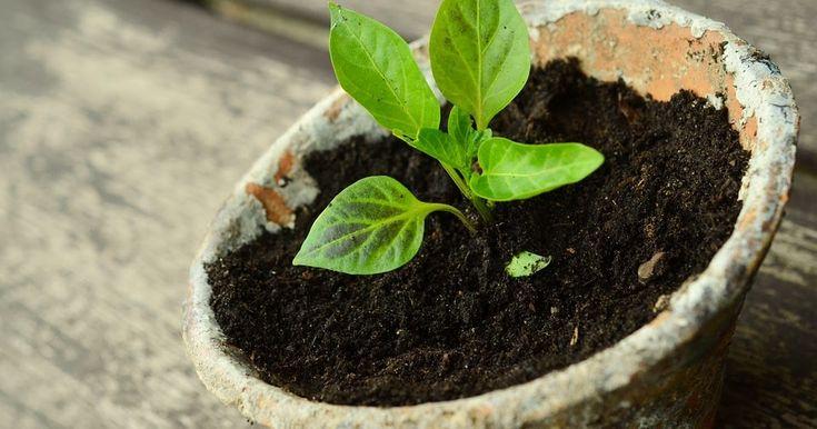♡ Koşulsuz sevgiyi öğrenmeye...http://www.kozmikhayat.com/2016/03/kosulsuz-sevgiyi-ogrenmeye-bir-bitki-yetistirerek-baslayabilirsiniz.html #sevgi #koşulsuzsevgi #bitki