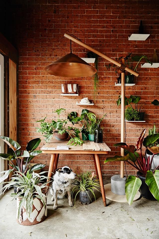 The plant-filled workspace of Georgina Reid  from The Planthunter. Photography: Kristina Soljo | Story: real living