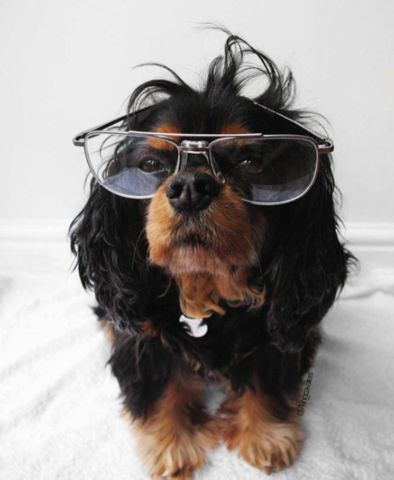 Unlessyou've been living under the biggest, most cluelessrock EVER, you're well aware that the Cavalier King Charles Spaniel is in fact the most snuggly-facedlove nugget breed of all time. Here's a list to prove it. 1. They only judge you when you truly deserve it.