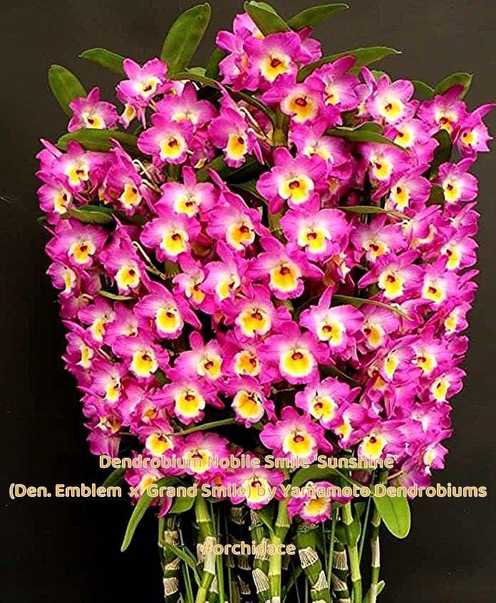 Pin On 7 Flower