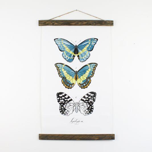 Butterfly - Wikipedia