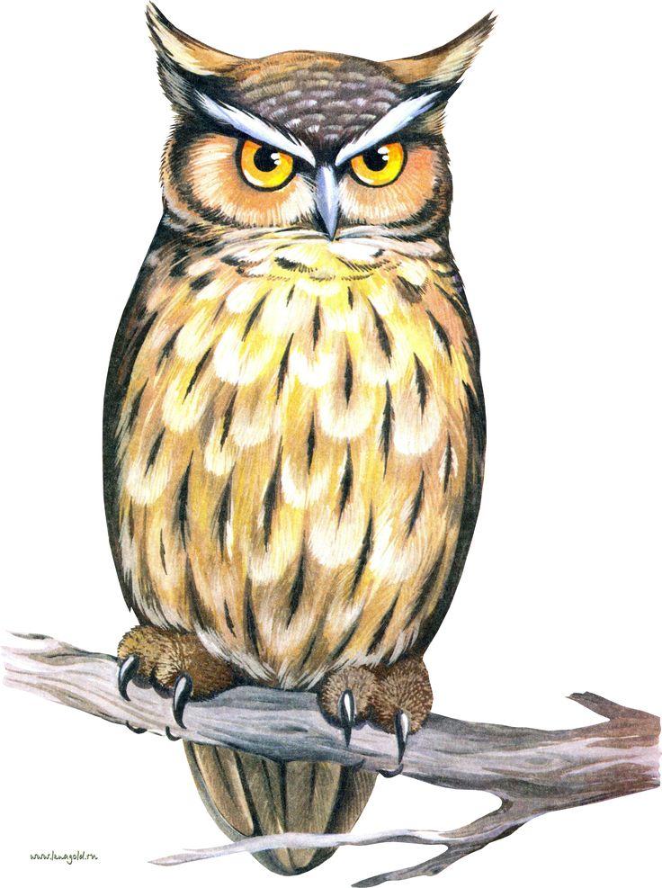 Картинки с изображением совы для детского сада