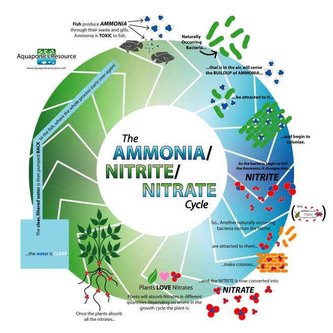 the production of ammonia and its building Murrah federal building in oklahoma city, ok, contained ammonium nitrate as a component of its explosives anhydrous ammonia has a variety of uses, including as an agricultural fertilizer.