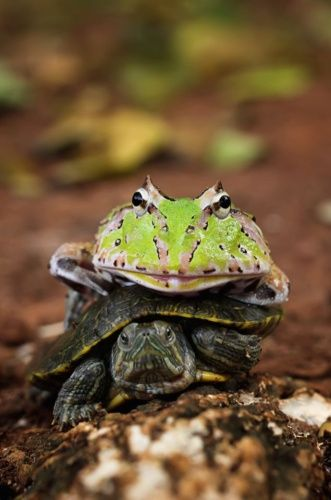 <p>Sure, 2016 has had its fair share of low points. But we can always rely on the animal kingdom to put a smile on our faces.</p><p>We've taken a look back and picked the best animal pictures of the year of creatures great and small.</p>