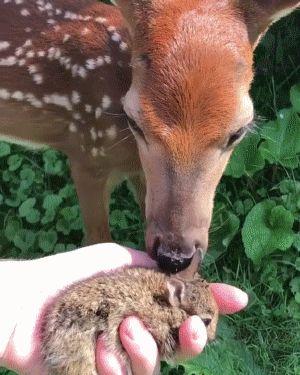 Bambi and Bunny