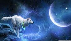 wolf moon blue wallpaper 1080p wallpaper