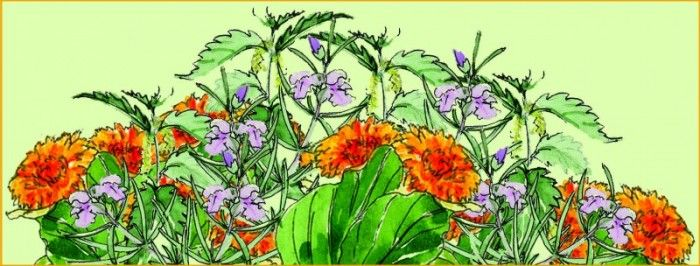 Kesäluonto Lääkitsee - Frantsila. Luonto antaa kesäisten villivihannesten ja talven varalle kerättävien yrttiteeainesten lisäksi apua myös kesän pikkuvaivoihin. Myös kotiapteekki kannattaa varustaa ajantasalle luonnon yrttituottein!  Haavat ja loukkaantumiset: Ulkoleikeissä syntyvien haavojen ja pintanaarmujen ikivanha ykkösrohto on pihoilla villinä kasvava...