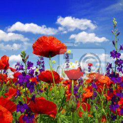 Naklejki  panoramiczny, płatki kwiatów, Równina - kwiaty letnie i chmury ✓ Szeroki wybór materiałów ✓ Dostosujemy produkt do Twoich potrzeb ✓ Sprawdź opinie naszych klientów!
