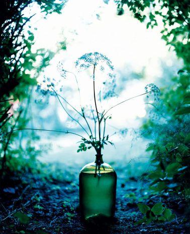 Ett sjukt snyggt stilleben som man kan ha på inbjudningskorten. Inte nödvändigtvis av Denise Grunstein, utan kanske någon annan bra fotograf som man råkar känna...    Denise Grünstein : Flowers : CameraLink