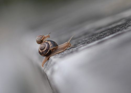 Bug slug insect fetish