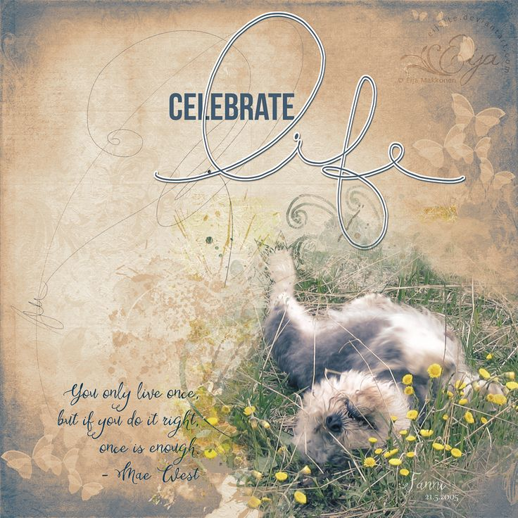 Celebrate Life by Eijaite.deviantart.com on @DeviantArt