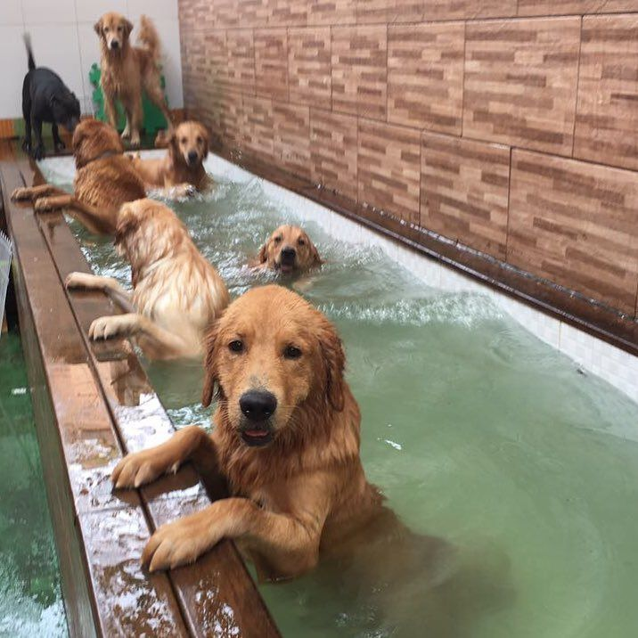 pup pool party
